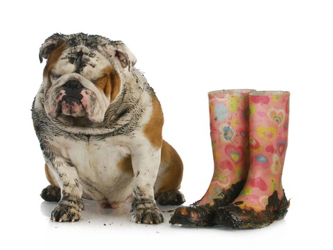 pets and footwear bring soil into the home that will dull a polished marble floor